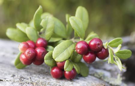cowberry: Cowberry