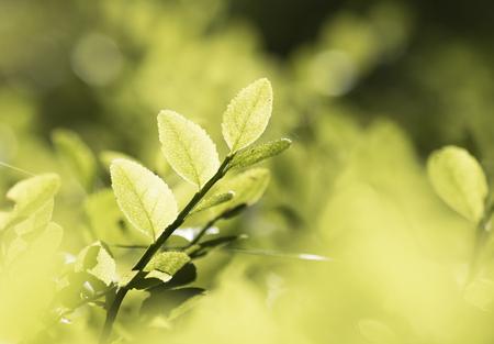 greenery: Summer greenery