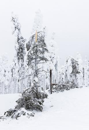Les arbres brisés par la neige Banque d'images - 56023151