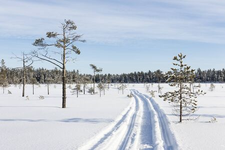 wintery day: Snowmobile track in the swamp