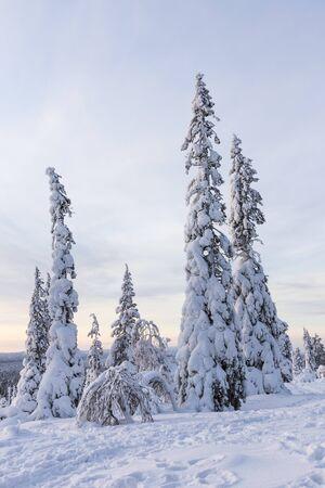 Paysage d'hiver du nord de la Finlande Banque d'images - 55922477