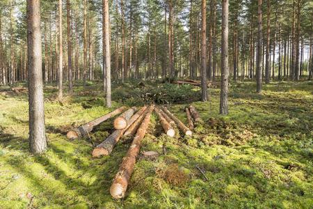 Foresterie dans la forêt de pins en Finlande Banque d'images - 65543418