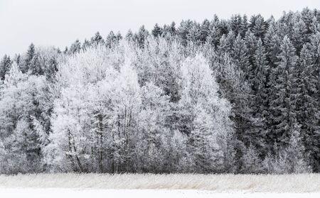Bord de forêt givré en Finlande Banque d'images - 73245321