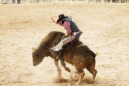 rodeo cowboy: Bucking action during the bull rinding competition at a rodeo.