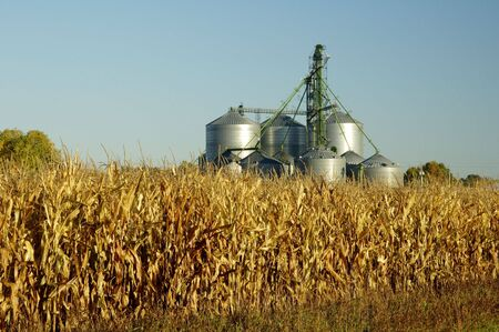 food storage: A grain elevator towers above a corn field  in South Dakota. Stock Photo