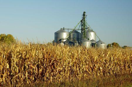 Un elevador de grano torres por encima de un campo de maíz en Dakota del Sur.