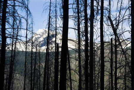 forest fire: De los incendios forestales en el Parque Nacional Glacier Foto de archivo