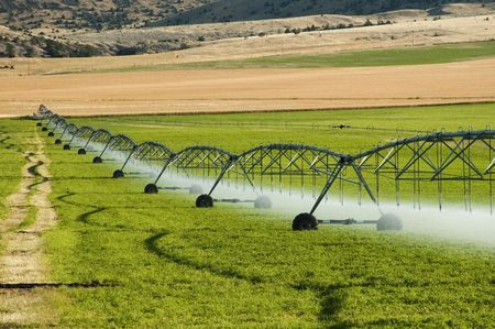 a center pivot irrigation system working in an alfalfa field