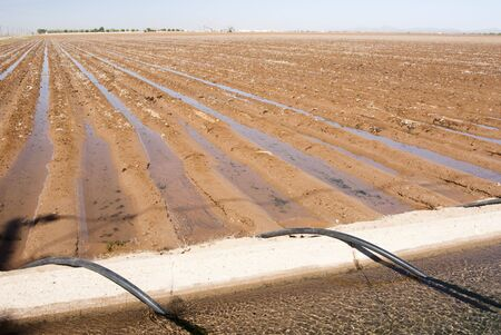 an irrigation canal and siphon tubes beside a field in Arizona Stock Photo