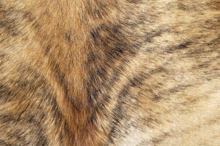 Detail of a cowhide rug on display.