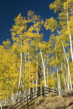 brilliant fall colors in Fish Lake National Forest in Southern Utah.