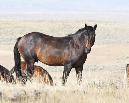 free roaming mustangs on the McCullough Peak Wild Horse Management Area in Wyoming Stock Photo - 5532846