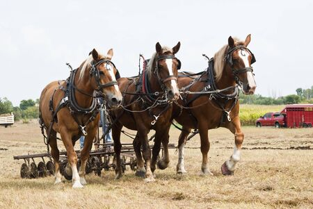 horse-drawn farming demonstrations during the Homesteader Day Harvest Festival at the Beaver Creek Nature Area in South Dakota.