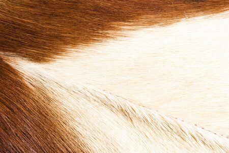 abstract patterns in a closeup view of springbok animal fur