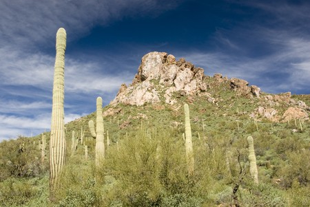 scenic view of the Sonoran desert wilderness in Arizona