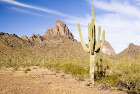 scenic view of the Sonoran desert in Arizona
