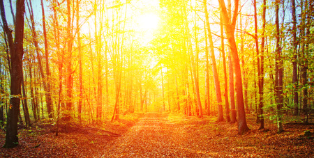 Sun in autumn forest 写真素材