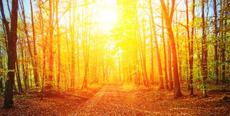 Sun in autumn forest Archivio Fotografico