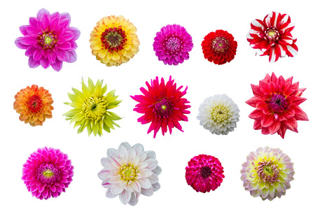 Isolated colorful flower heads photo