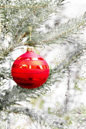 christma: Red christma ball on a fir branch Stock Photo