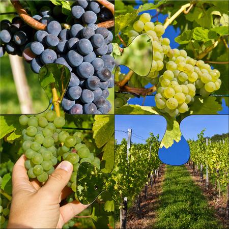 collate: Vine harvest - photo collage puzzle Stock Photo