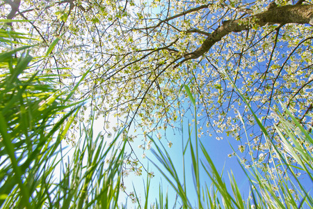 Meadow and tree in spring - low angle shot