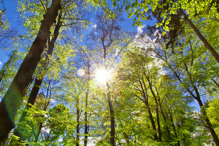 Sun in forest