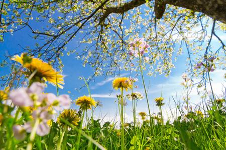 Un beau jour de printemps - à faible angle de tir Banque d'images