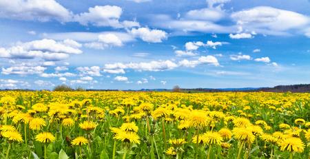 width: Flower field in spring