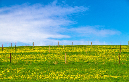 fense: Field with flowers under blue cloudy sky