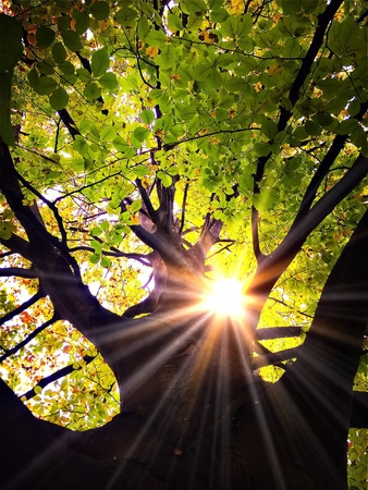 bright: Bright sun in a beech tree Stock Photo