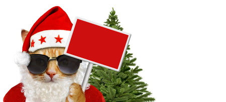 Cat with santa claus costume and blank sign