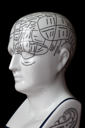 Porcelain phrenology head used in psychology