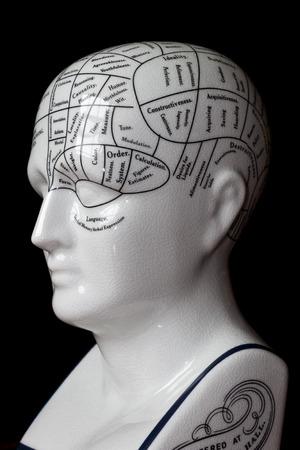 Porcelain phrenology head used in psychology  photo