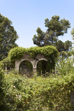 vestige: A ruined house remains in middle of wild vegetation.
