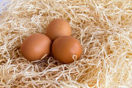 incubation: Brown chicken eggs lay in the straw  Side view