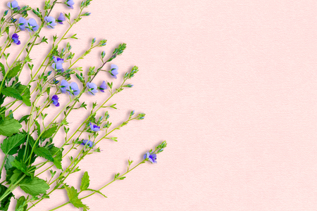 Spring background with small purple flowers the name of the stock spring background with small purple flowers the name of the flower is veronica chamaedrys mightylinksfo