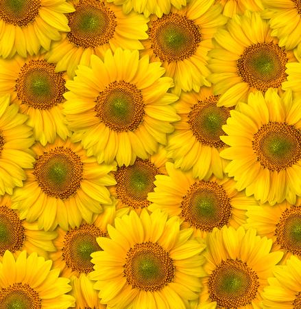 Seamless floral pattern. Chaotic arrangement of flowers. Decorative orange sunflower. Spring-summer style. Banco de Imagens
