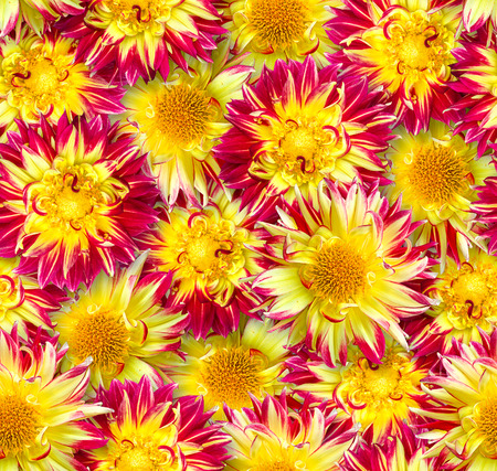 Seamless floral pattern. Chaotic arrangement of flowers. Red and yellow dahlia flower. Spring-summer style. Imagens