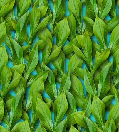 Seamless pattern of peony leaves. Direction leaves up. Bright juicy greens. Turquoise background. Surface covered with leaves.