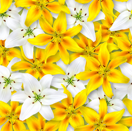 Seamless floral pattern. Chaotic arrangement of flowers. White and yellow lily flower on a light green background. Spring-summer style.