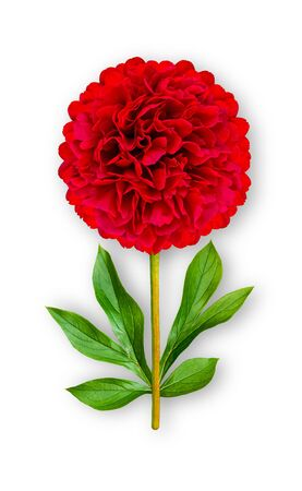 Combined unusual peony flower. Red Peony. Art object. Object on a white background. Minimalism.