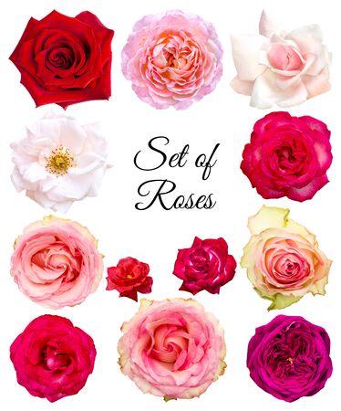 Set Rosen in verschiedenen Farben und Sorten. Blumen auf weißem Hintergrund. Objekte für Grafikdesign.