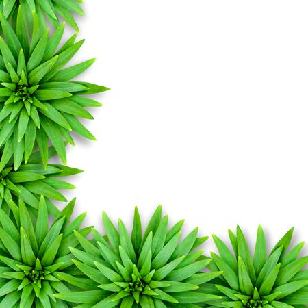 Isolated natural background of lily leaves. Floral template for decoration. Leaves are located in the lower left corner of the background. Banque d'images