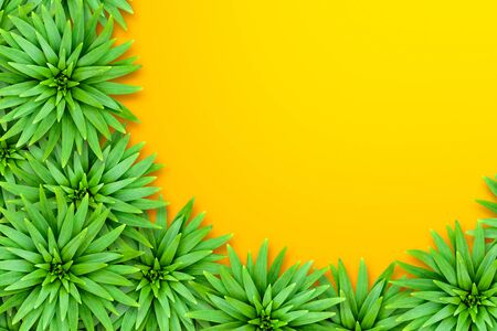 Natural tropical background from lily leaves. Bright sunny style. The concept of summer tropical exotic. Leaves are located in the lower left corner.