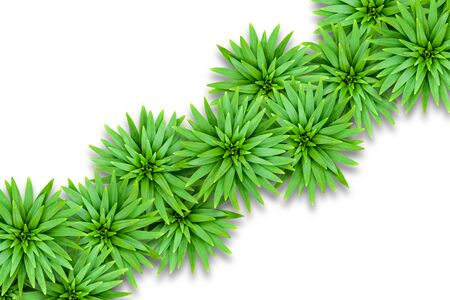 Isolated natural background of lily leaves. Template for summer decoration. Leaves are located diagonally. Foto de archivo