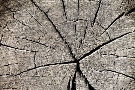 The texture of the old blackened logs in the cut. Decorative background. Grunge texture. There are crevices and cracks in the log section. Stock fotó