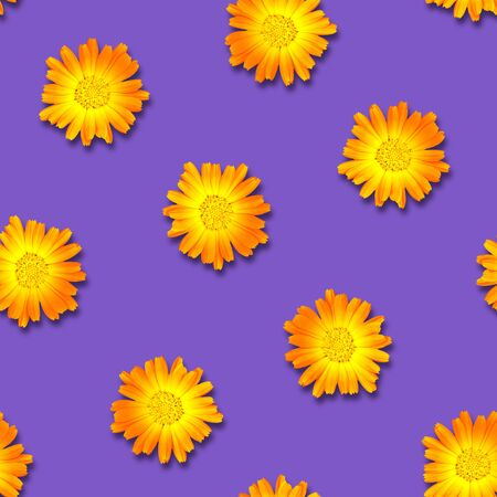 Seamless pattern of calendula flowers on a bright purple background. Natural floral background. Flowers are randomly arranged.