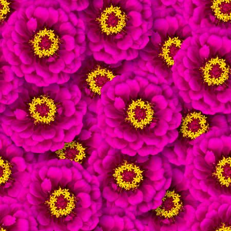Seamless pattern of pink zinnia flowers. Natural flower background. Floristic design. Flowers randomly overlap.