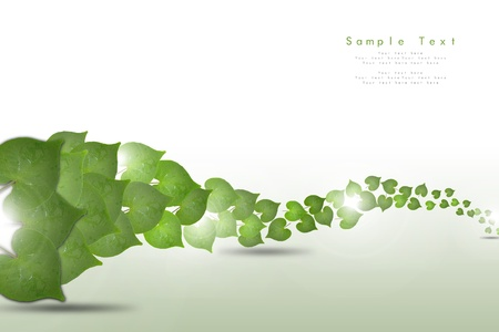 Branch with fresh green leaves Stock Photo - 11158205